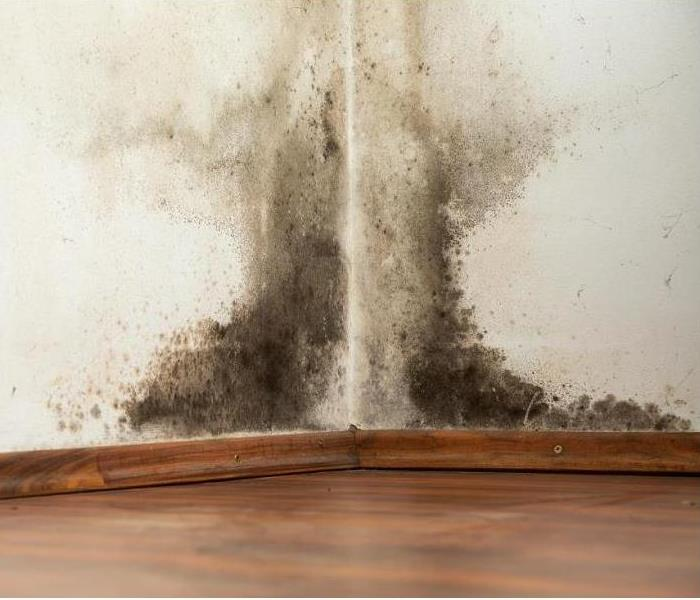 Mold Remediation Do You Have Visible Signs of Mold Growth