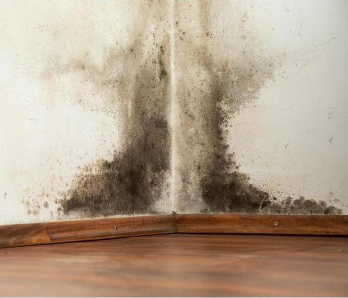 Mold Remediation Steps To Prevent Mold